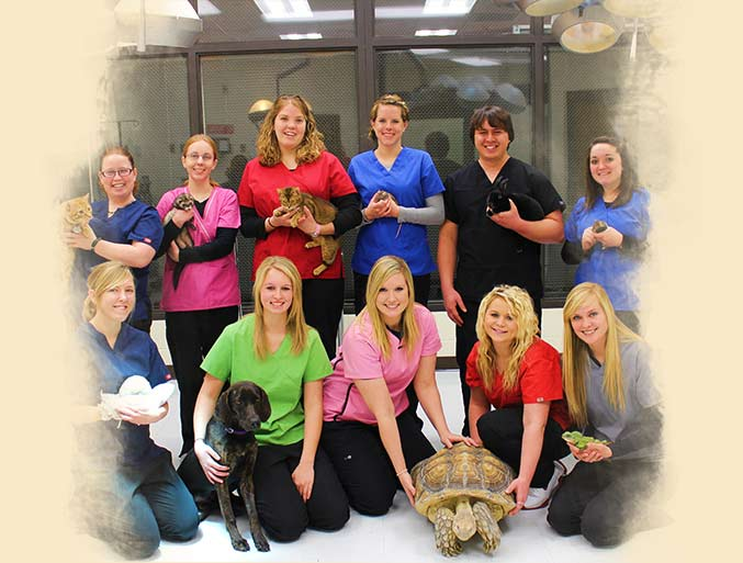 Beyond the Classroom Vet Tech