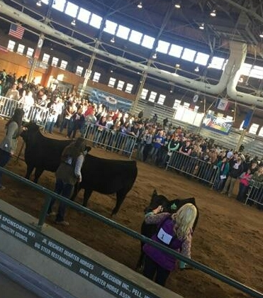NCTA was among 22 teams from 10 colleges in the 2-year division at the Iowa Beef Expo. (Hinrichs/NCTA photo)