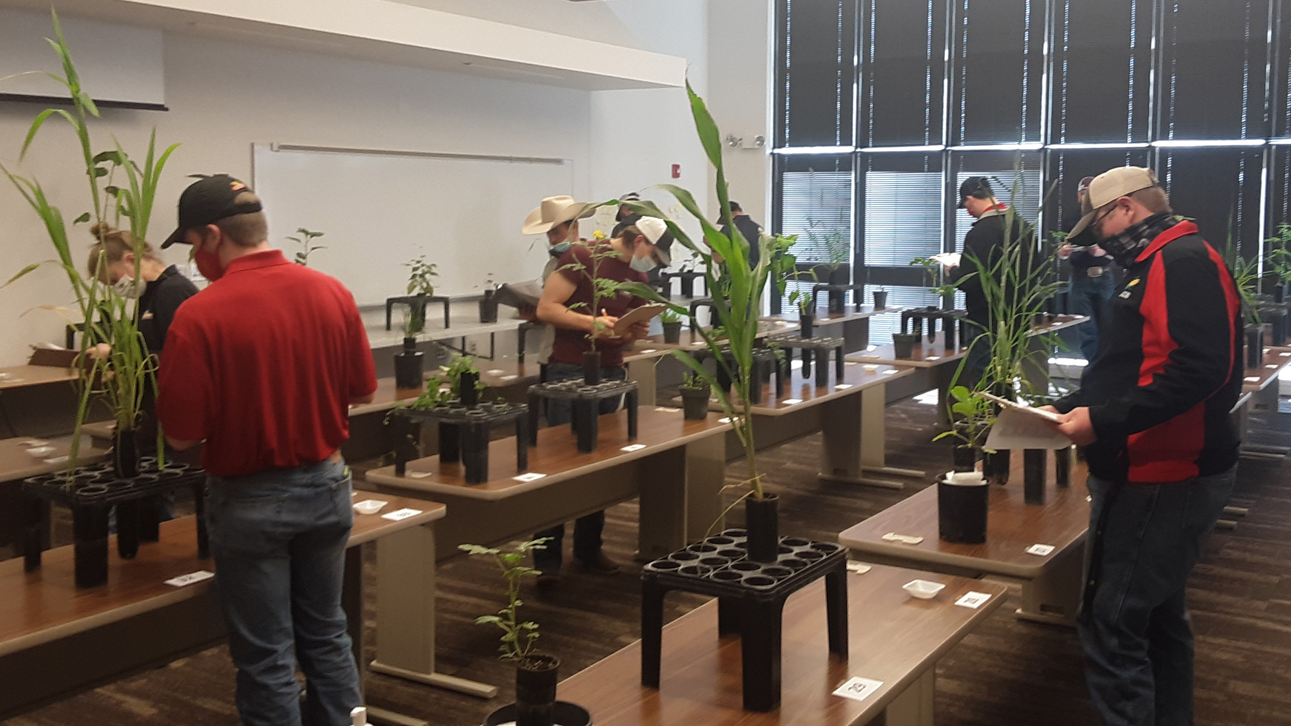 Crops judging students identify plants and agronomic specimens at an NCTA contest in early March. (Ramsdale / NCTA photo)