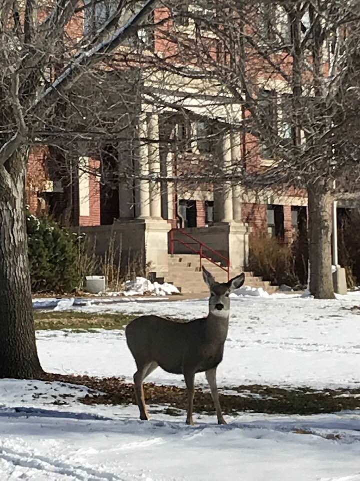 A deer visits Ag Hall at the Nebraska College of Technical Agriculture on December 5. (Photo by NCTA Dean Rosati)