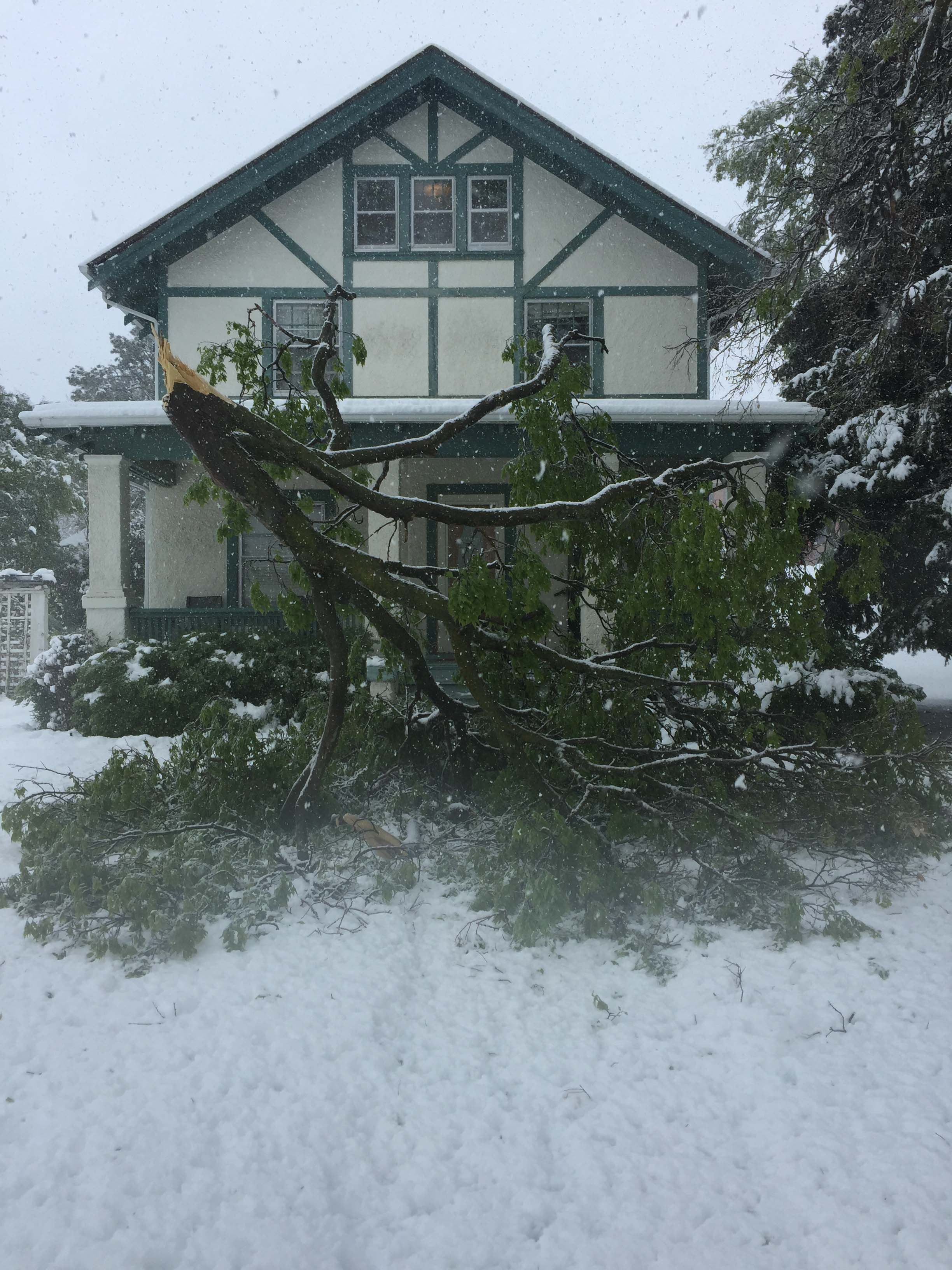 Wet, heavy snow during a snowstorm in April, 2017, broke a large treelimb at the NCTA campus. (NCTA photo)