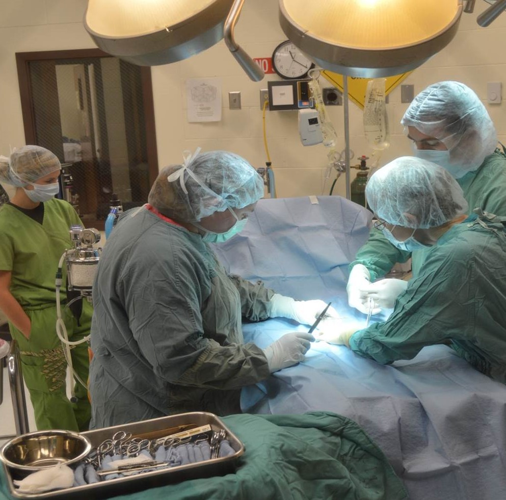 surgical training at nctas veterinary technology program the curtis college has been named a top