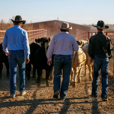 NCTA livestock judging camp is May 24-25 in Curtis. (Chandler/NCTA)
