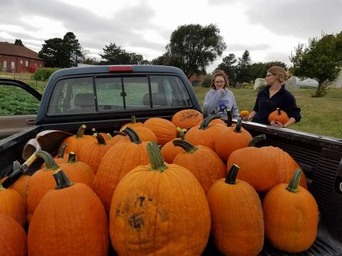 The NCTA Pumpkin Sale will again be hosted by the Horticulture Club. (File photo)