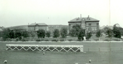 Sheep graze in the foreground of the old Aggie football field south of Agriculture Hall (three story brick at right). Ag Hall was the first structure built in 1912. At left, is the first residence hall. Both buildings are used today. (NCTA Archives)