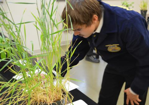 Nebraska District 11 FFA students identified plants during CDE contests held February 6 at NCTA. National FFA Week is Feb. 16-23. (J. Kennicutt / NCTA News)