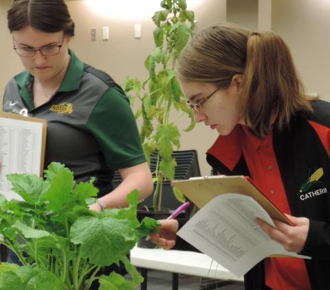 Catherine Ljunggren, an NCTA student from Harvard, at right, studies a plant for crops judging. (Mary Pat Hoag photo)