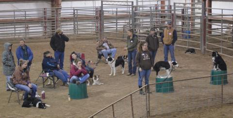 Participants and their stock dogs watch a Cow Dog Clinic in 2017 at the NCTA campus. (NCTA photo)