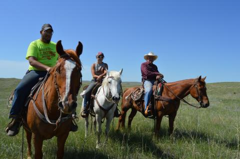 Roy Cole, far right, is assisted in moving cattle at the Graves Ranch by students Cassie Bratton and Cody Brown who are serving their summer internship with the NCTA farm crew. (Crawford/NCTA News photo)