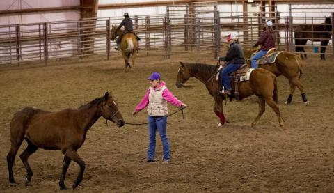 Equine management and Ranch Horse Team students at the Nebraska College of Technical Agriculture work their horses in the indoor arena at the Livestock Teaching Center at the Curtis campus. (NCTA Photo by Craig Chandler / University Communication.)