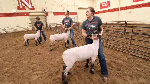 A virtual livestock judging camp will be June 16-18 hosted by the University of Nebraska. It is open to Nebraska youth and nationally. (University Communication photo)