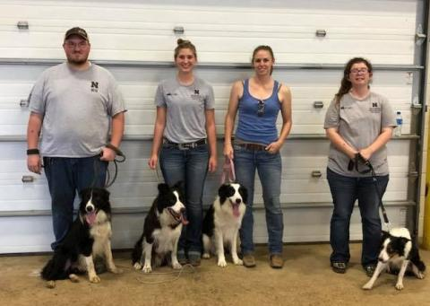 NCTA stock dog contestants in the Collegiate Division on Day 1 of the Nebraska State Fair stock dog trials were from left, Brenden Bose and Charlie; Kendra Marxsen and Tank, LeighLynn Obermiller and Griff, and Dorothy Fulton and Tang. (Courtesy photo)
