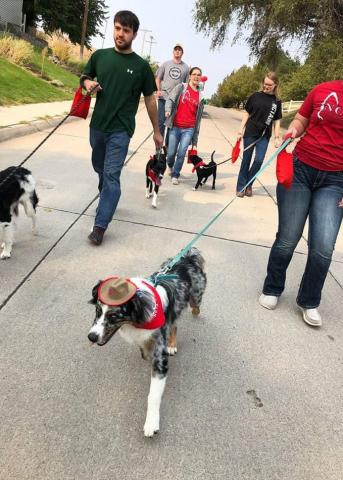 Canines lead the Fall Festival parade entry for the NCTA Stock Dog Club. (NCTA photo)
