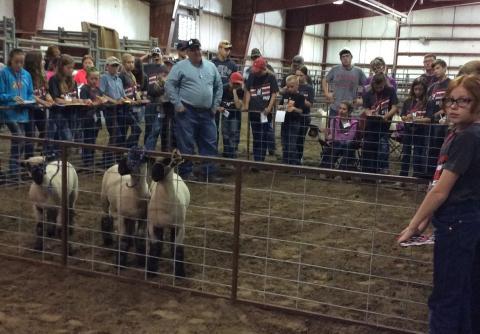 Dr. Doug Smith explains sheep judging at the Standard of Excellence Livestock Judging Camp at NCTA. (File Photo)