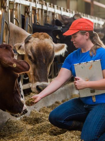Students at the Nebraska College of Technical Agriculture can now study dairy science  at Curtis and at the South Dakota State University dairy program at Brookings. (SDSU photo)