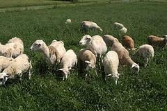 NCTA is host to a daylong symposium Saturday on the sheep and goat industry.