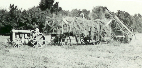 Early-day hay harvest at the campus farm in Curtis. The high school opened in 1913 and it became an NU college in 1965. (NCTA Photo Archives)