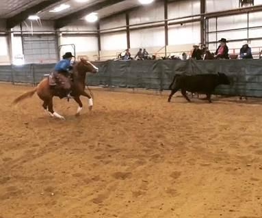An NCTA Ranch Horse Team rider competes in the Working Cow class at Sterling, Colo Collegiate action resumes this fall.  Riders will be competing in open Ranch Horse or Stock Horse Association events over the summer. (Courtesy photo)
