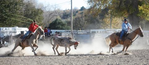 Aggie Rodeo is a popular competition team at NCTA in Curtis. Students like the small community, high quality academics, affordability, and student teams. (Craig Chandler / NCTA Photo)